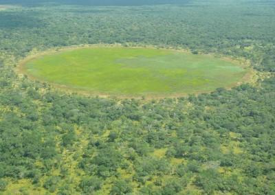 mozambiqueforet.jpg