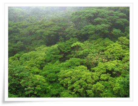 foret Costa Rica in SaidaNature, Biodiversité et Environnement à Saida, Algeria